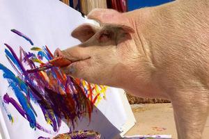 会画画的猪,作品价值几千美金