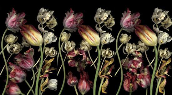 露西亚?西蒙斯/Luzia Simons|<贮藏45/STOCKAGE 45>|250x150cmx3|光喷墨打印、亚克力玻璃/ Lightjet Print, acrylic glass|2006