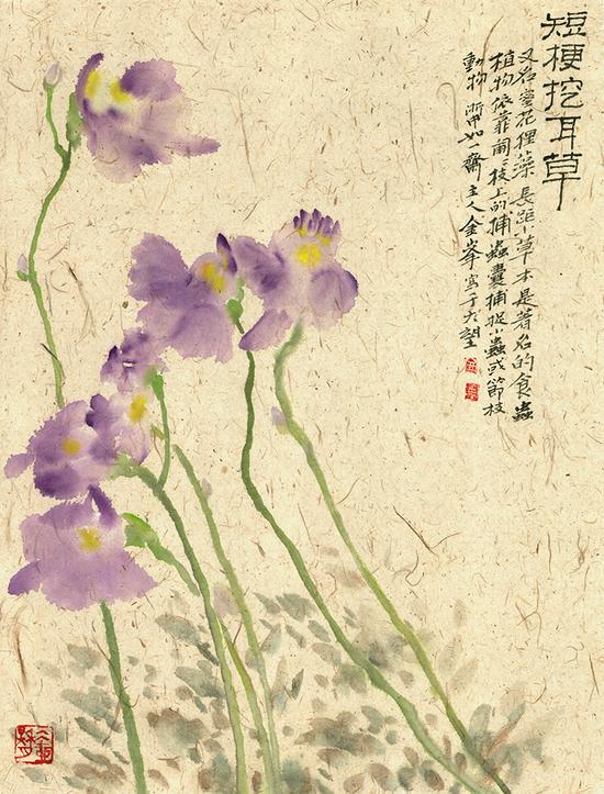 《短梗挖耳草》--金峰--纸本彩墨--46cnX62cm