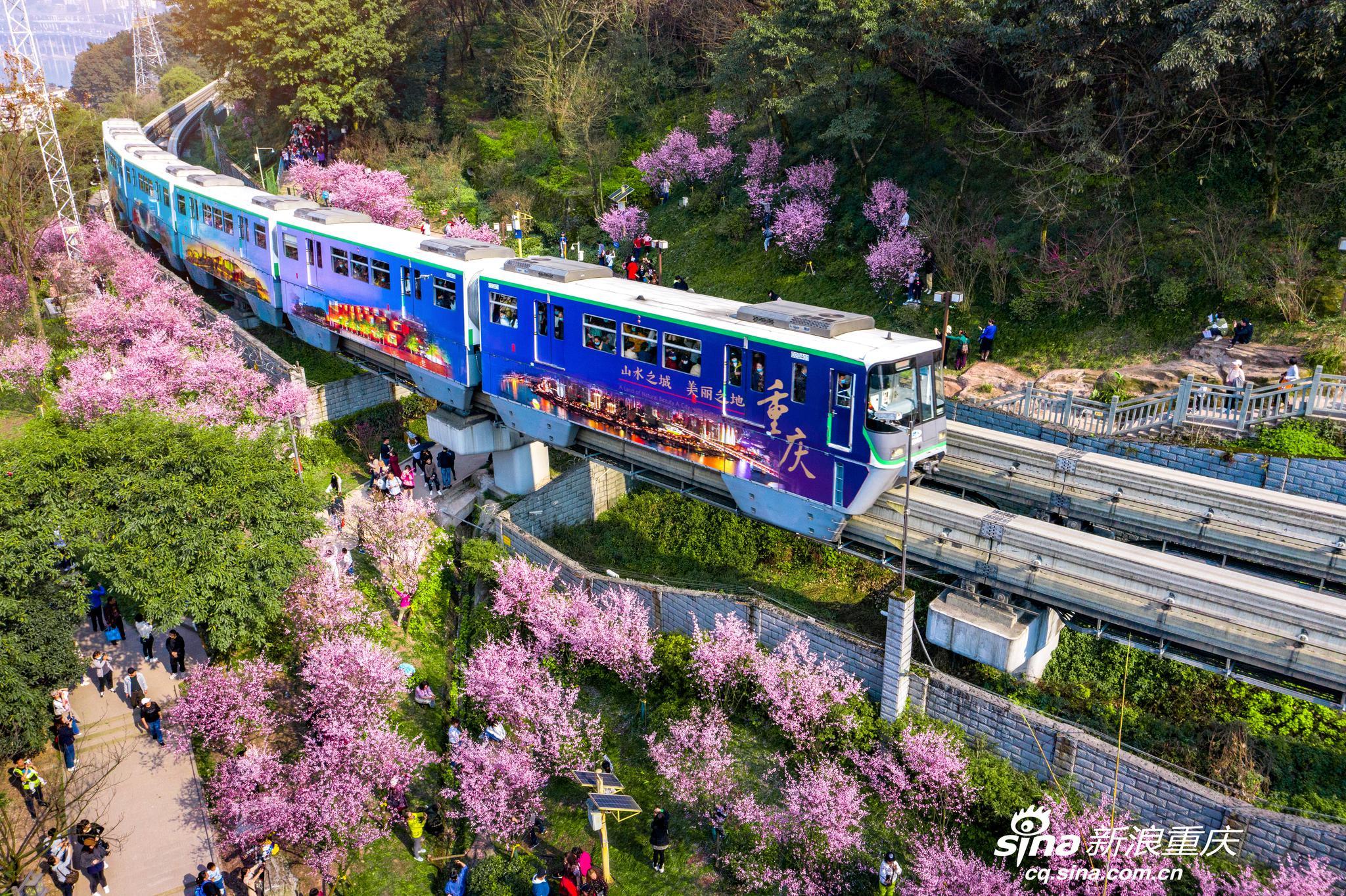 #重庆相册# 开往春天的山城列车