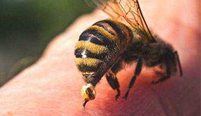 被蜂蛰伤后会怎样?该如何处理呢?