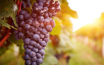 多吃几颗葡萄 这些好处会降临于你!