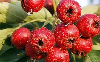 记住!这7种果蔬不宜空腹吃