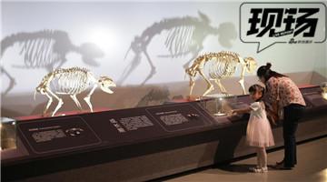 打探重庆自然博物馆科普展