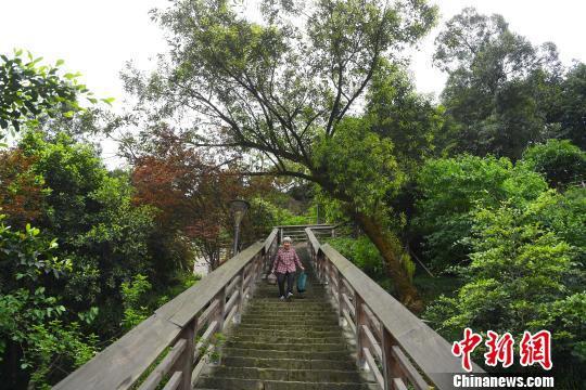 图为一老人经过山林步道为自己孙女送午饭。 陈超 摄