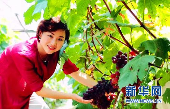游客在果园采摘葡萄。新华网发(姚华胜 摄)