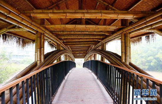 """""""一心桥""""使用700多根毛竹建造而成。新华网 彭博 摄"""