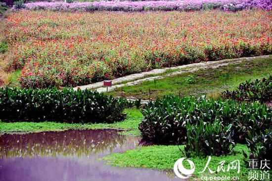 万州石桥水乡和湿地公园。