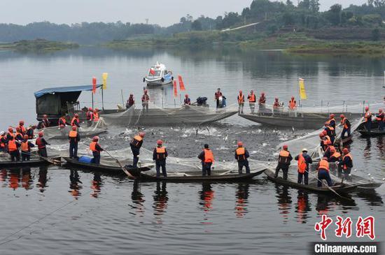 图为重庆玉滩水库开启今年第一网捕鱼活动,鱼儿争相跳出水面,溅起一片片浪花。 周毅 摄