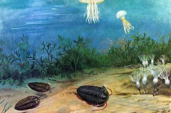 """以上就是""""奇妙的进化之旅""""的重点内容"""