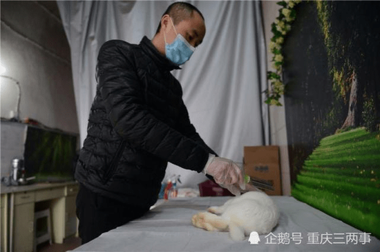 杨宇细心地给宠物喷上消毒水。摄影 邹乐