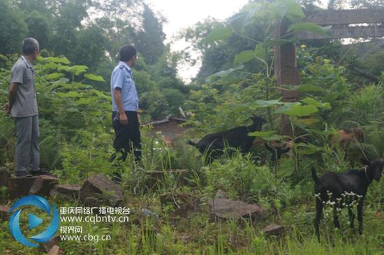 看着失而复得的八只羊,垫江县高峰镇建兴村村民老黄紧握着民警的手表示感谢。