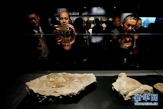 市民参观永川博物馆的化石标本。新华网 李相博 摄