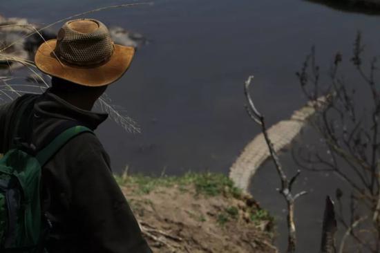 ▲星巴在马拉河边走进鳄鱼