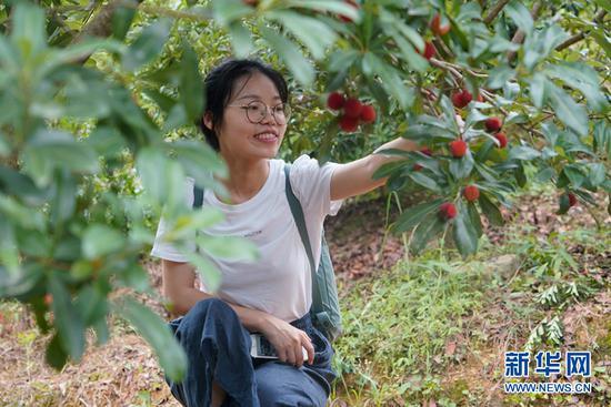 游客在田家寨摘杨梅。新华网 马天龙 摄