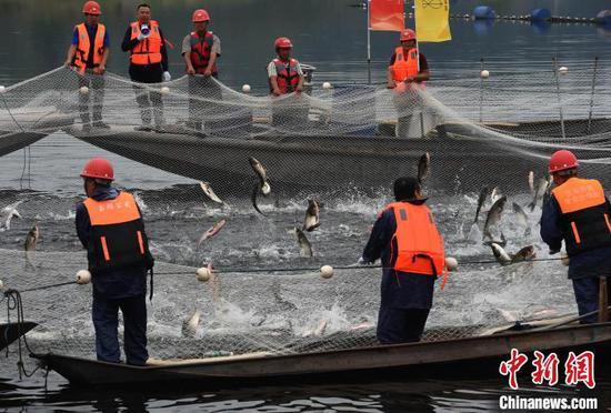 图为捕鱼人拉网捕鱼,鱼儿争相跳出水面。 周毅 摄