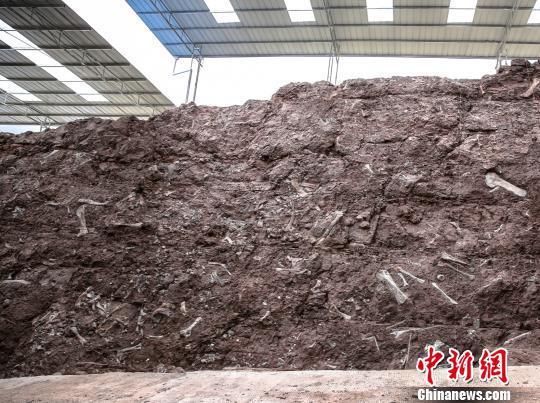 图为重庆云阳恐龙化石墙。重庆市规划和自然资源局供图