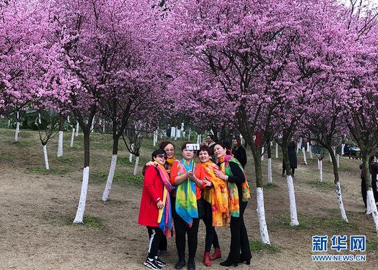 27日上午,市民在照母山森林公园内赏花拍照。新华网 陶玉莲 摄