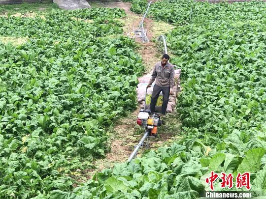 图为农户驾驶着运输机在田间地头运货。 钟欣 摄