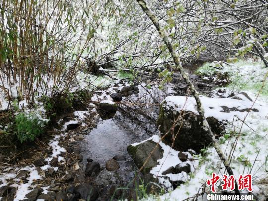 7日,重庆城口县高山地区迎来了一场降雪。图为城口县黄安坝景区。 城口县宣传部供图 摄