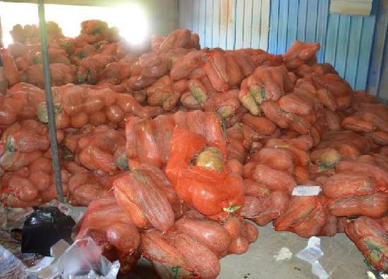 堆积在仓库中的南瓜。
