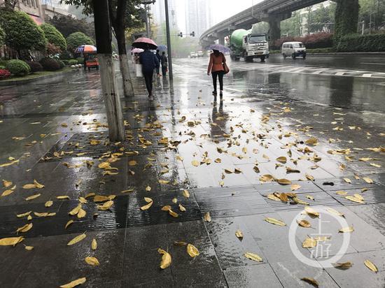 △南岸区,春雨后人行通道上掉下片片黄叶,仿佛如秋。上游新闻·重庆晨报记者 李斌 摄