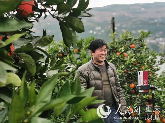 刘科平正在自家果园直播销售脐橙。彭国威 摄