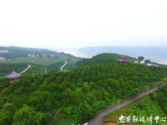 图一:记者近日拍摄的涂井乡友谊村三峡橘海风貌。