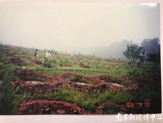 图二:拍摄于2000年的涂井乡友谊村种植柑橘树前的情景。