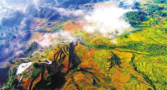 金秋时节,酉阳花田梯田万亩水稻进入成熟期,金色梯田美不胜收。