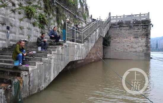 上游新闻-重庆晨报记者 杨新宇 摄影报道