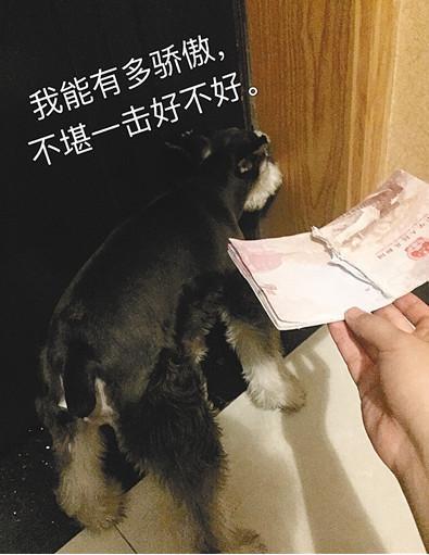 赵平的护照被兜兜撕得粉碎