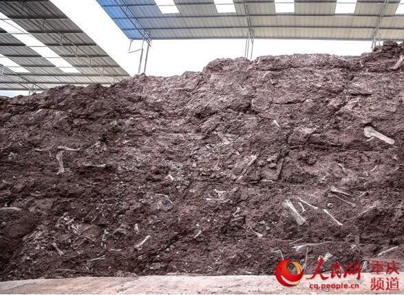 重庆云阳恐龙化石墙。重庆市规划和自然资源局供图