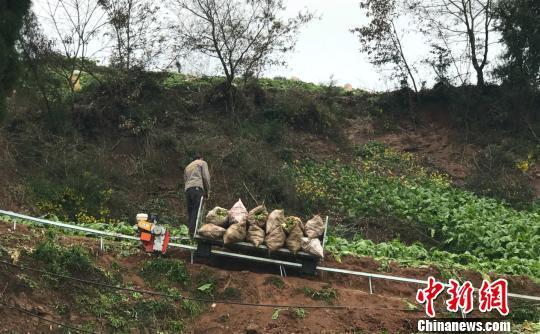 图为农户驾驶运输机运货,一次可载千斤农作物。 钟欣 摄