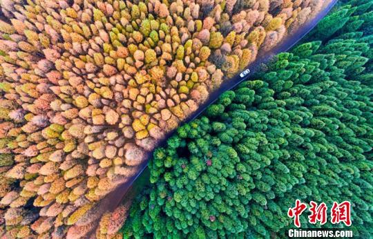 山王坪喀斯特国家生态公园,一半春天一半秋天。 汪新 摄