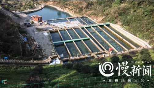 △水库下方的三文鱼养殖池清澈见底