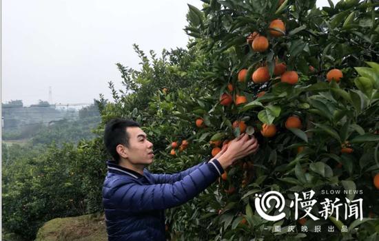 杨鹏在果农家看柑橘质量