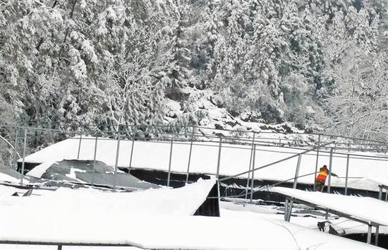 巫溪巫溪县云祥食用菌股份合作社食用菌大棚被大雪压塌,救援队员正在清理棚上积雪。(李晓燕供图)