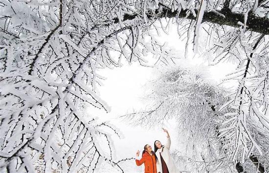 黔江1月4日,游客在黔江区灰千梁子国家森林公园赏雪。 特约摄影 杨敏