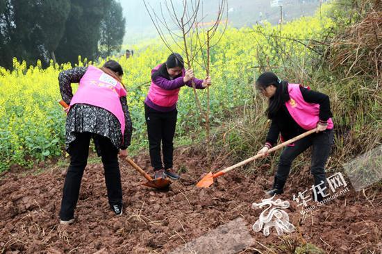 妇女植树。市妇联供图