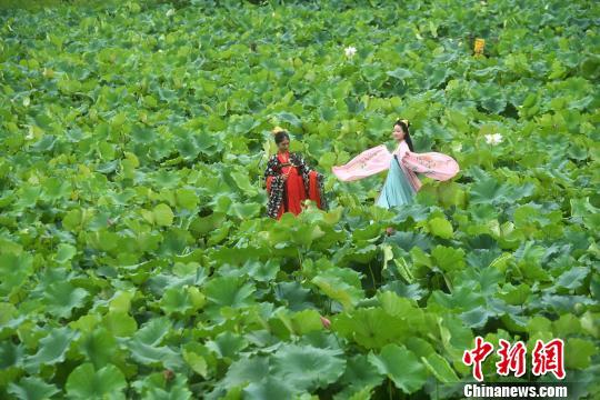 """50亩荷花竞相绽放 重庆民众荷塘""""悦""""色[组图]"""