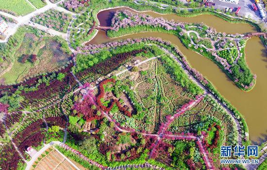 重庆垫江万亩田园发展赏花经济 种出乡村振兴新图景