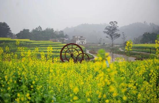 金色黄庄油菜花文化节