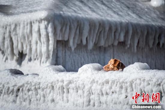 """看着都冷!丹麦一栋房子被冻成""""冰坨"""""""