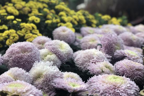 重庆举办城市花博会 市民趁暖阳花漾游园
