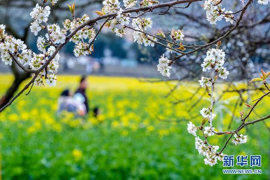 重庆:市民户外踏青 享受春光放飞心情
