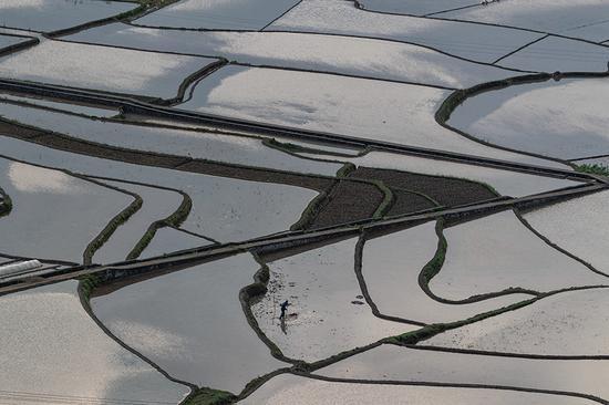 重庆南川:春耕田园五线谱 广袤农田身影忙