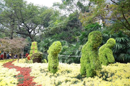 时隔15年的鹅岭公园菊花展来了!免费向市民开放