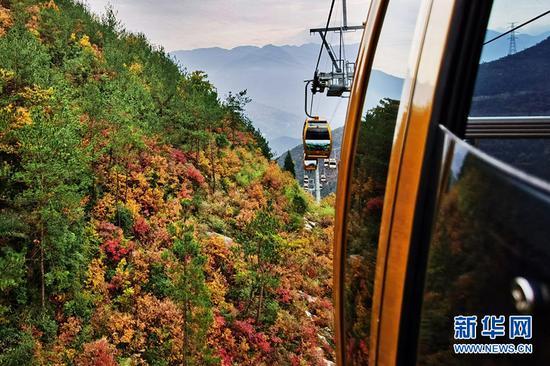 冬日三峡披上红妆 漫山彩叶层林尽染宛如画卷(图)
