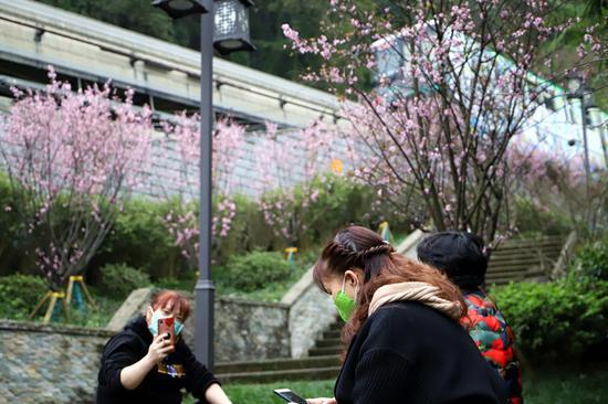 """开往春天的轨道列车 带你""""云""""看三月重庆好风光"""